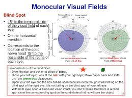 Blind Spot In Left Eye Afferent Visual Pathway