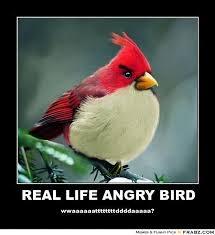Angry Birds Memes - 30 funny hunger games quotes memes funny jokes and hilarious