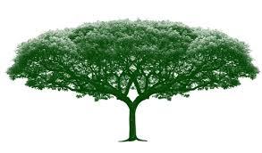 big tree photoshop brushes photoshop brushes free