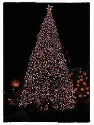 san francisco tree lighting 2017 28 best holiday lights images on pinterest christmas shop displays