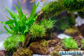 Aquascape Nj Aquascaping At Anubias Booth With Teknogreen Lamps During Interzoo