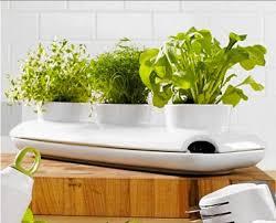 plante pour cuisine jardinière sos plantes aromatiques pour la cuisine déco cool