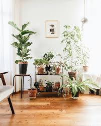 Urban Jungle Living And Styling 45 best urban jungle images on pinterest plants big plants and