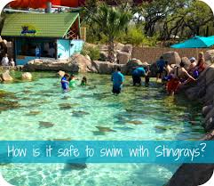 Texas what is the safest way to travel images Why swimming with stingrays is safe and so much fun at aquatica jpg