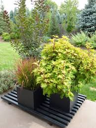 colorado garden punch list happy new year and new blog
