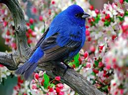 wallpaper with birds 13 beautiful hd and 4k wallpapers of exotic birds that you should