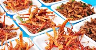 insectes dans la cuisine 10 choses à savoir sur les insectes comestibles