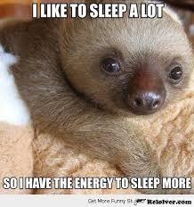 Funny Sloths Memes - fancy 126 best sloth memes images on pinterest wallpaper site