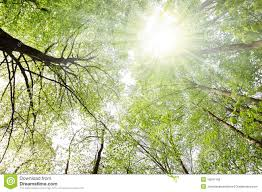 trees and sun stock image image of lighting twigs 19241169