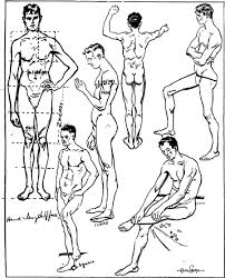 proportions u0026 measurements of human body including men women