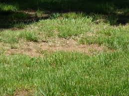 fill uneven lawn low spots how to level a lawn gardening know how