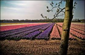11 best holland land of flowers images on pinterest dutch tulip