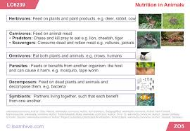 learnhive icse grade 7 biology nutrition in animals and plants