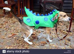 dragon nest halloween town background dragon dog stock photos u0026 dragon dog stock images alamy