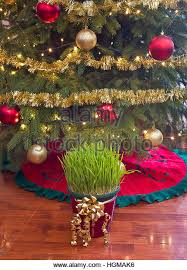 Decoration Under Christmas Tree by Family Under Christmas Tree Stock Photos U0026 Family Under Christmas