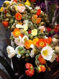 wholesale flowers near me 12 best flowers from the san francisco wholesale flower market