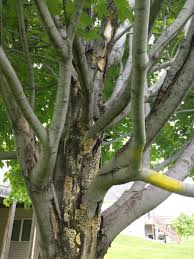 what s wrong with my tree ask an expert