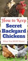 Chickens For Backyard by Quiet Chickens For Backyards Backyard Decorations By Bodog