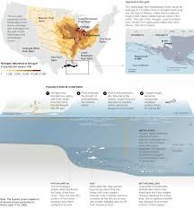 Map Of Gulf Coast Gulf Oil Spill The Effects On Wildlife Interactive Graphic