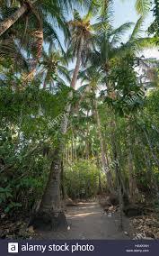 iguana island a hiking path through a tropical forest on iguana island panama