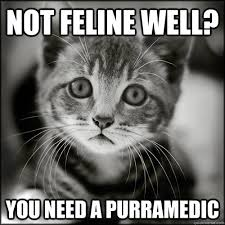 Funny Sick Memes - not feline well you need a purramedic sad your sick kitten