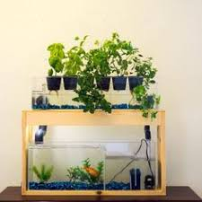 self watering herb garden kit big fish innovation products