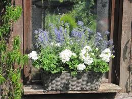 blumenkasten fã r balkon 89 besten blumenkasten bilder auf gardening