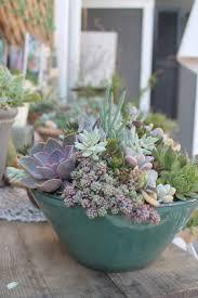 Indoor Plants Arrangement Ideas by 1165 Best Succulents Images On Pinterest Succulents Garden