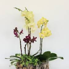 orchid delivery san jose florist flower delivery by flowers by