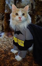 Kitten Halloween Costumes Pet 57 Greatest Pet Costumes