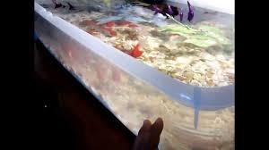 indoor fancy goldfish pond aquarium youtube