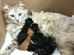 momma mia 7 important tips when caring for momma cats and kittens