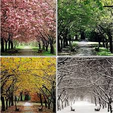 45 best four seasons images on pinterest four seasons