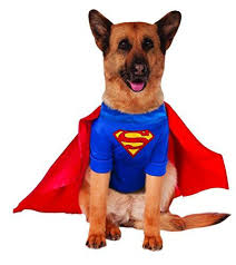 halloween for dogs costumes 6 of our favorite dog halloween costumes this year leesville