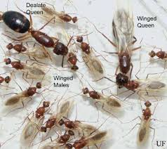 tips on controlling ants gardening in the panhandle