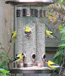 free photo eating golden finch backyard bird feeder max pixel