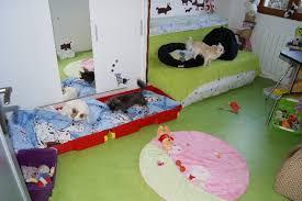 chambre pour chien accueil elevage des nichées de riopse eleveur de chiens chihuahua