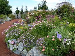southern california native plants landscaping annie u0027s annuals and perennials retail and online nursery buy