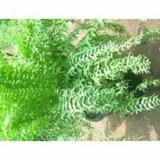 ornamental plants service provider from rajahmundry