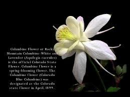 columbine flowers columbine flowers