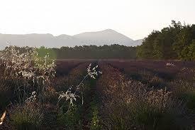 chambre agriculture du var chambre d agriculture du var fresh the lavender plateau at hd