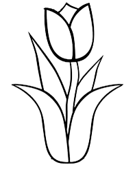 coloring exquisite tulip coloring kids pages tulip