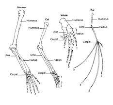 anatomy image organs comparative anatomy of vertebrates evolution