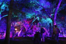 enchanted forest of light tickets enchanted forest of light preview party descanso gardens guild