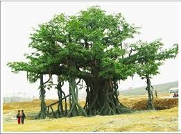 decorative outdoor high imitated artificial banyan ficus tree