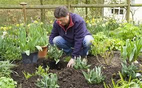 beginner vegetable garden landscaping u0026 backyards ideas