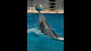 dolphins may be leaving popular u s aquarium science aaas