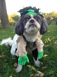 Halloween Costume Ideas Dogs 286 Dogs Dressed Images Dog Dresses