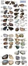 31 best raising quail images on pinterest raising quail raising