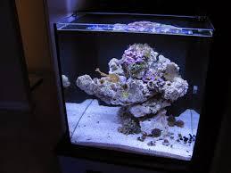 Led Aquarium Lighting Current Usa Orbit Marine Led Aquarium Light Product Review